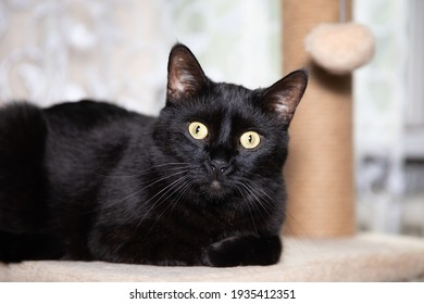 Black cat looks really shocked.