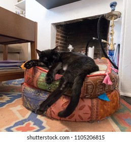 A black cat lounging on his cushions for little catnap