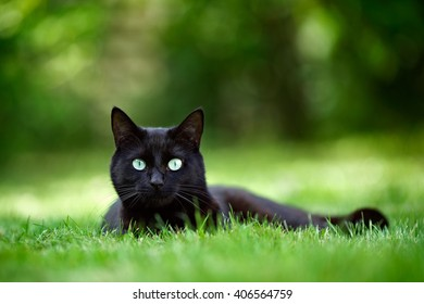 Black Cat lying on grass staring at the camera.