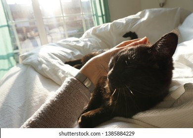 black cat lying on white bed sheets and receiving caresses