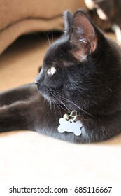Black Cat Lying Relaxed on the Floor
