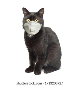Black cat in medical face mask isolated on white