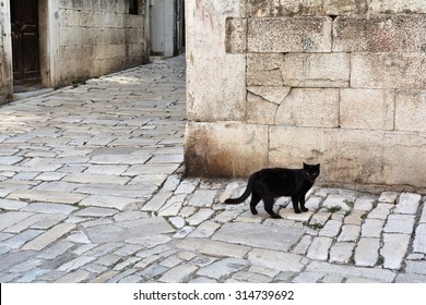 black cat in the old town of Rovinj