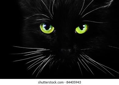 black cat on black background