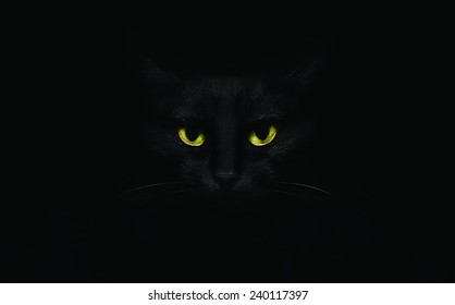 Black Cat Images Stock Photos Amp Vectors Shutterstock