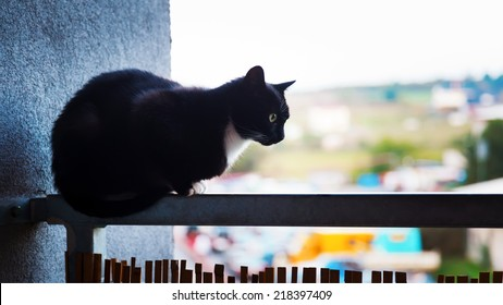 Black cat on iron railing the balcony
