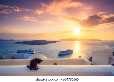 A black cat on a ledge at sunset at Fira town, with view of caldera, volcano and cruise ships, Santorini, Greece. Cloudy dramatic sky.