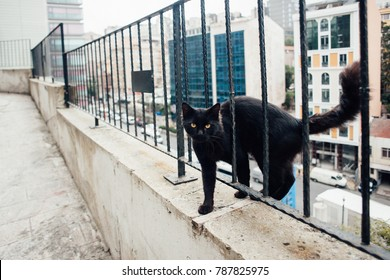 Black cat on the street in Istanbul