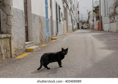 black cat on the street of mediterranean town