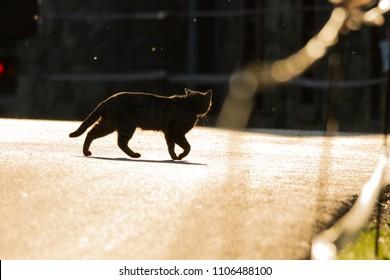 black cat on a sunny street running from car