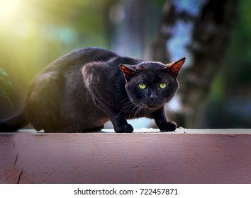 Black cat on wall