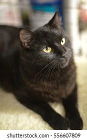 Black cat on a white rug.