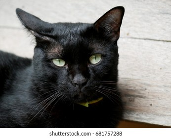 Black cat on a wooden bench