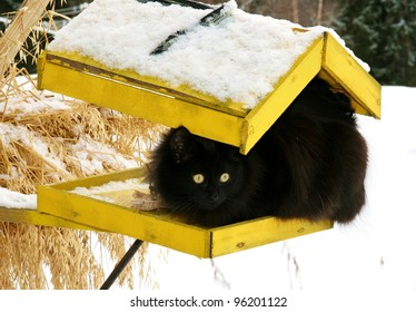 Black cat on a yellow bird's feeder