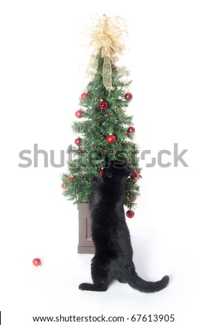 black cat playing with christmas tree and decorations on white background