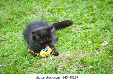 Black Cat Playing With Toy on The Grass