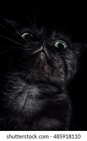 black cat, black cat portrait, cat in the dark, glowing eyes home kitten, cute being,