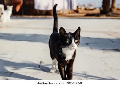 Black cat posing at street.