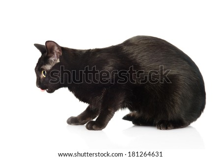 Black cat in profile. isolated on white background