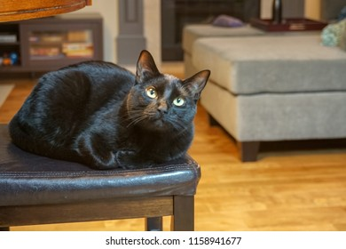 Black cat relaxing inside a house.