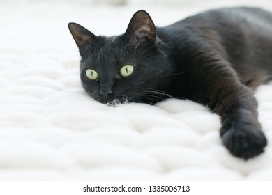 Black cat relaxing on knitted merino plaid, enjoying warm and soft super chunky yarn blanket, cozy home and hygge trendy concept