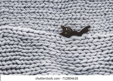 Black cat relaxing on knitted woolen chunky blanket. Funny kitty in the warm soft bed. Scandinavian style, hygge, cozy concept.