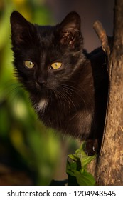 Black Cat scratching tree with sharp claws