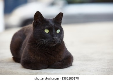 black cat sits nicely and and looks