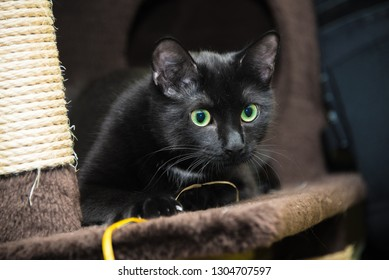 Black cat sits on a shelf in an animal shelter