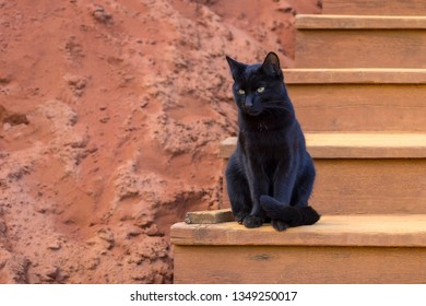 A black cat sits quietly on the steps in the ochre cliffs of Roussillon, France.