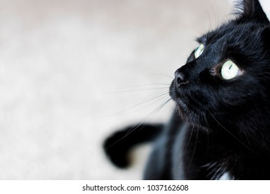 Black Cat Sitting