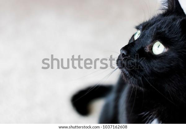 Black Cat Sitting