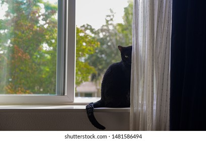 A black cat sitting by the window with half of its face hiding in white curtain with an evil look