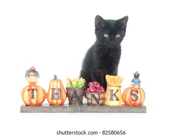 Black cat sitting with a fall thank you sign on white background