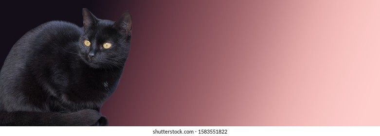 black cat sitting on pink background