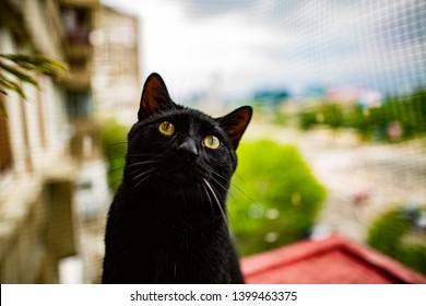 Black cat sitting on a terrace