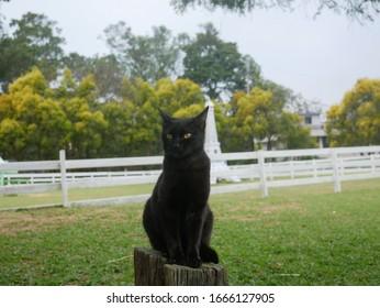 Black cat sitting on wood.