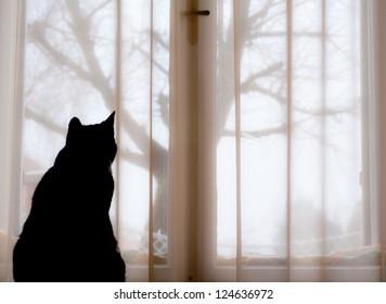 Black cat is sitting in a window