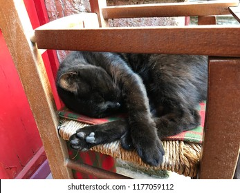 Black cat sleeping on a chair.