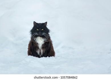 Black cat in snow background