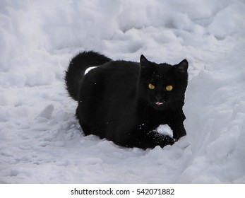 Black Cat in the snow. Kittens love to play among the first snow and look very funny.