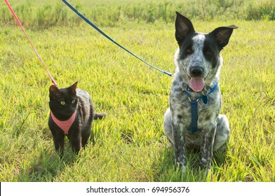 Black cat and a spotted puppy on leash against sunny green background