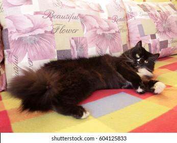black cat sprawled on the colorful sofa