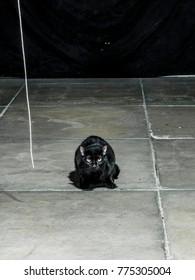 Black cat squating on cement floor