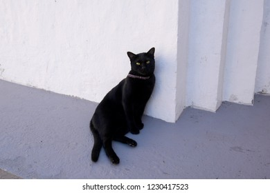 Black cat standing by the wall