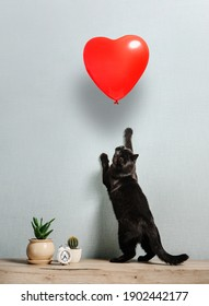 A black cat stands on its hind legs to get a heart-shaped balloon. Valentine's Day card.
