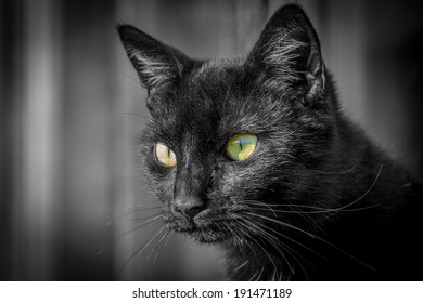 Black cat stares intensely with big green eyes