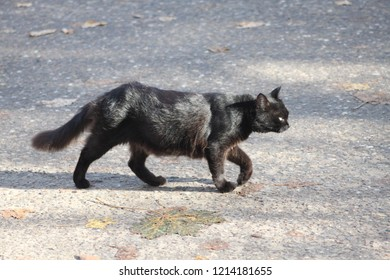 A black cat with a tan and goes and does not pay attention to you