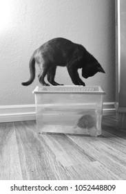Black cat and turtle