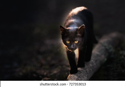 Black cat walking down the street